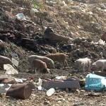 Ко пали депонију смећа у Мајданпеку?